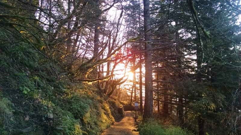 The trail to the top of Multnomah falls, away from the majority of the water and the crowds.