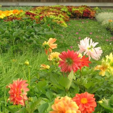 greenhouse 4-07 num5